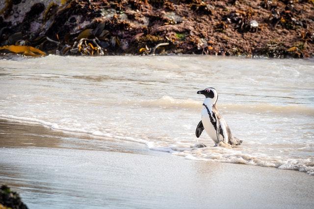 pingüinos chile
