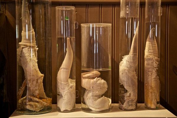 museos raros y curiosos